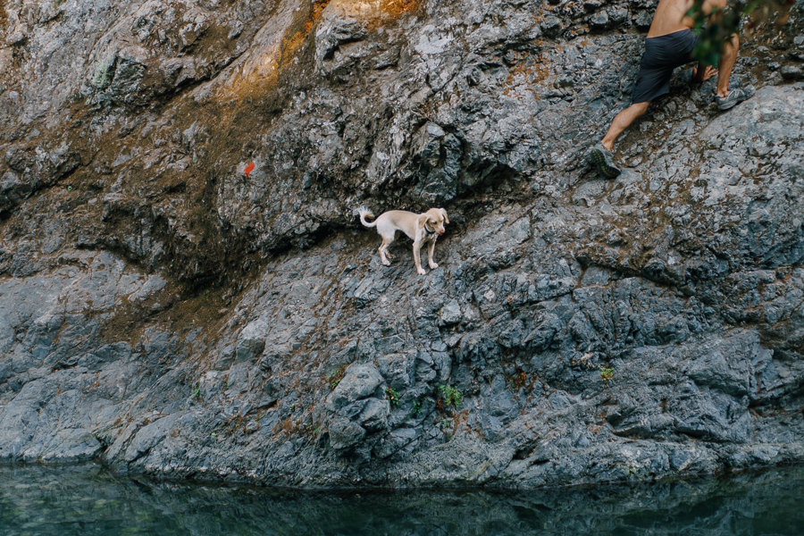A dog at a natural waterfall spring shot at Samothraki on August of 2016, image by Ilias Antoniou.